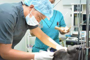 Estudiar veterinaria: ¿Qué es la veterinaria?