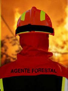 Pruebas a agente forestal