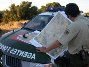 Qué requisitos se necesitan para optar a oposiciones a agente forestal
